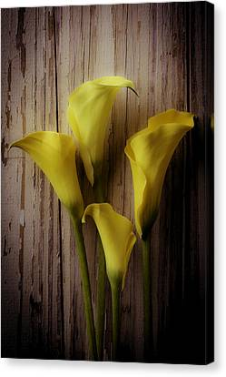Moody Calla Lilies Canvas Print by Garry Gay