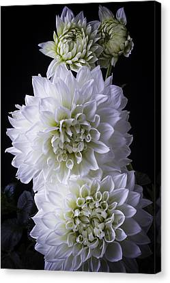 Large White Flower Canvas Print - Moody Dahlias by Garry Gay