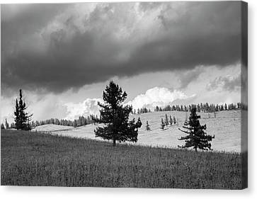 Canvas Print featuring the photograph Moody Meadow, Tsenkher, 2016 by Hitendra SINKAR