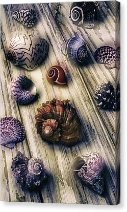 Moody Sea Shells  Canvas Print