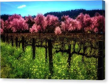 Moody Spring Vineyards Canvas Print by Garry Gay