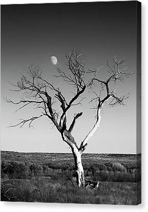 Canvas Print featuring the photograph Moon And Memory At Bosque Del Apache N M by Mary Lee Dereske