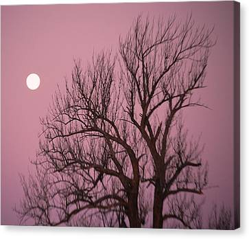 Canvas Print featuring the photograph Moon And Tree by Sumoflam Photography