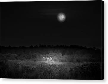 Moon Glow Canvas Print by Mark Andrew Thomas