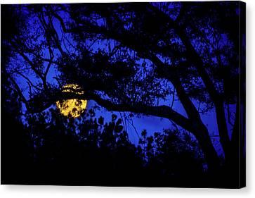 Beauty Mark Canvas Print - Moon Harvest by Mark Andrew Thomas