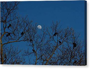 Moon In The Sky 3 Canvas Print