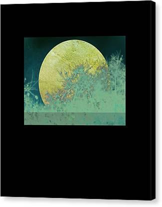 Moon Magic Canvas Print by Ann Powell