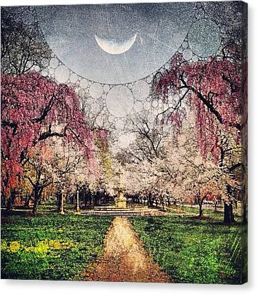 Moon Over Cherry Canvas Print