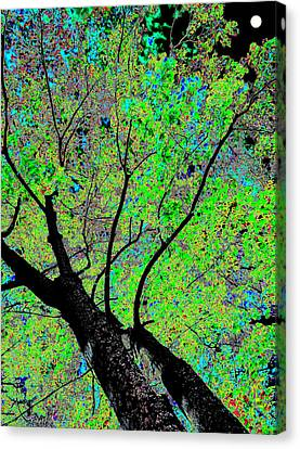 Moon Over The Maples Canvas Print by Will Borden