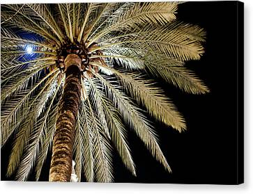 Moon Through Palm Tree Canvas Print by Photo by Stuart Gleave