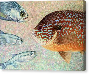 Mooneyes, Sunfish Canvas Print by James W Johnson