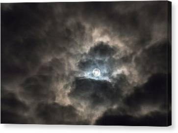 Moonglow Canvas Print by Loree Johnson