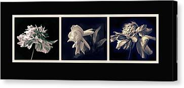 Moonglow Triptych Canvas Print