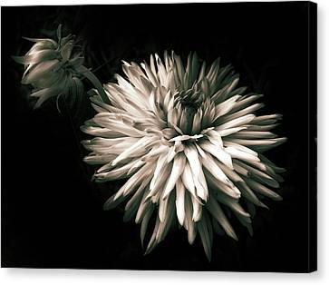 Moonlight And Dahlia Canvas Print