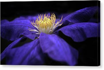 Moonlight Clematis Canvas Print by Jessica Jenney