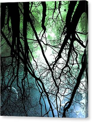 Moonlight Forest  Canvas Print by Marianna Mills