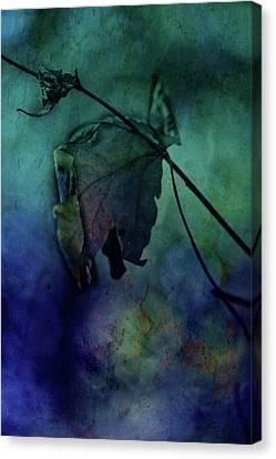 Moonlight Serenade Canvas Print by Bonnie Bruno