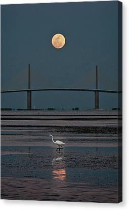 Moonlight Stroll Canvas Print by Steven Sparks