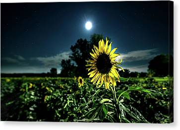 Canvas Print featuring the photograph Moonlighting Sunflower by Everet Regal