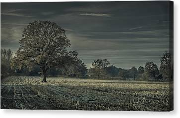 Moonlit Canvas Print by Chris Fletcher