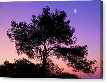 Moonlit Serenade Canvas Print