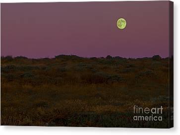 Moonrise In Bodega Bay Canvas Print by Diane Diederich