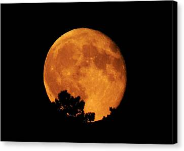 Moonrise Over Pines Canvas Print by Dawn Key