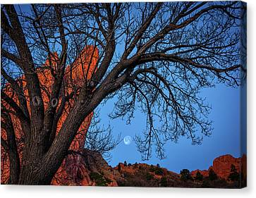 Moonset In The Garden Canvas Print by Darren White