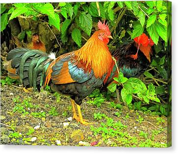 Canvas Print featuring the photograph Moorea Chicken by Bill Barber