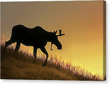 Canvas Print featuring the photograph Moose Evening Wander by Jennie Marie Schell