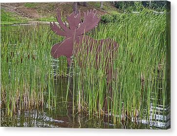 Canvas Print featuring the photograph Moose In Bulrushes by Sue Smith