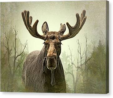 Moose In The Woodland Forest Canvas Print