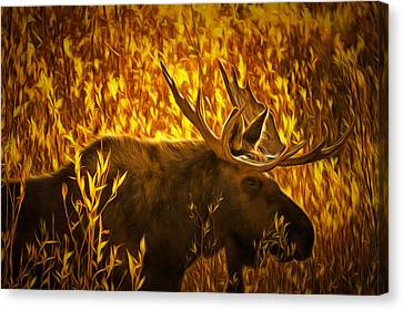 Moose In Willows Canvas Print by Mark Kiver