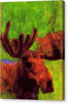 Moose Moments Canvas Print