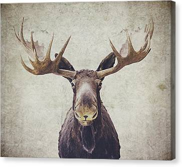 Vintage Canvas Print - Moose by Nastasia Cook