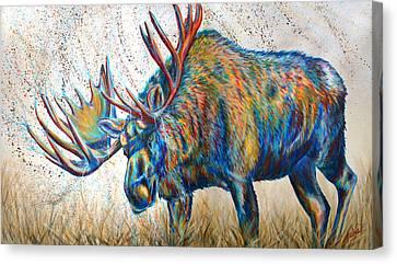 Moose Rut Canvas Print by Teshia Art