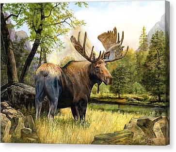 Moose Study Canvas Print by Robert May