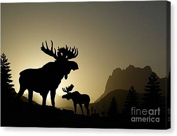 Moose Sunset Canvas Print by Anthony Djordjevic