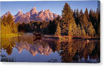 Bull Moose Canvas Print - Moose Tetons by Leland D Howard