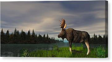 Moose Canvas Print by Walter Colvin