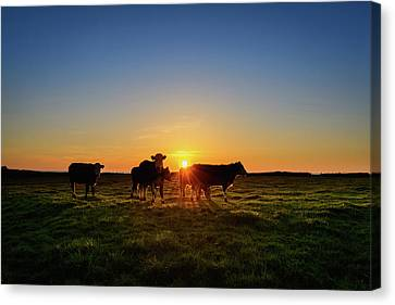 Moo'set Canvas Print by Florian Walsh