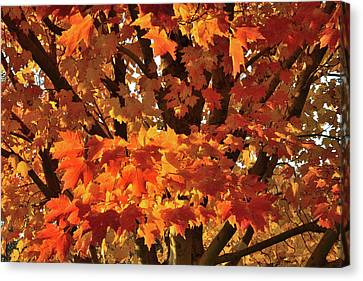 Canvas Print featuring the photograph Moraine Hills Sugar Maple by Ray Mathis