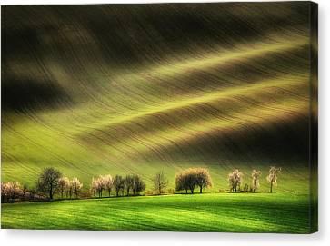 Moravian Fields Canvas Print by Piotr Krol (bax)