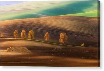Moravian Trees Canvas Print by Piotr Krol (bax)