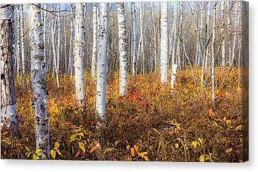 More To The Under-story Canvas Print by Mary Amerman