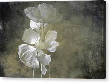 Moring Blooms Canvas Print