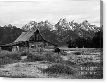 Mormon Row Famous Barn Canvas Print by Teresa Zieba
