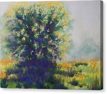 Morning Backlight Canvas Print by Becky Chappell