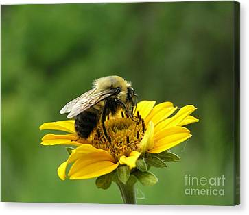 Morning Bee Canvas Print
