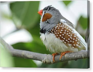 Morning Bird Canvas Print